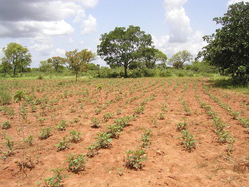 Imagen de la noticia Implementación de sistemas de riego y desarrollo de cooperativas agropecuarias de mujeres para garantizar la soberanía alimentaria de comunidades rurales de Houet