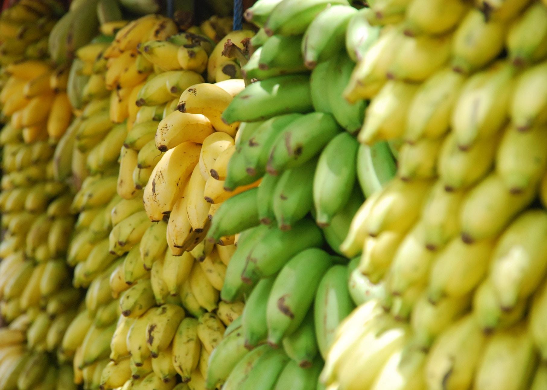 Imagen de la noticia Mejora de ingresos de productores y productoras de pequeña escala mediante la agregación de valor a la cadena de cacao en la región noroccidental de Honduras