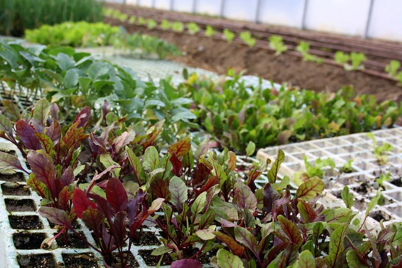 Imagen de la noticia Huertos escolares ecológicos: caminando hacia la soberanía alimentaria y la agroecología III