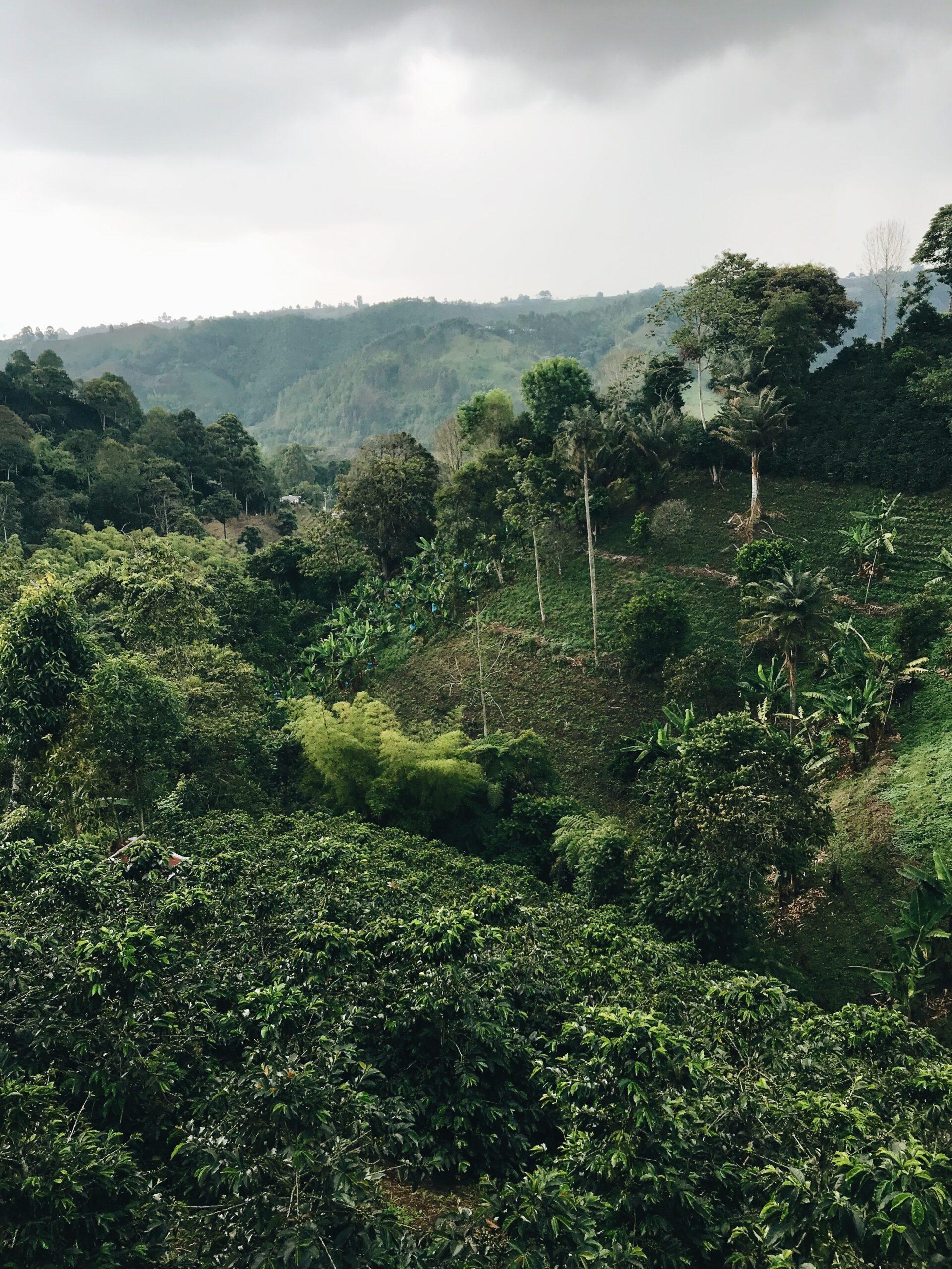 Imagen de la noticia Colombia: postconflicto con las FARC y reparación integral del daño causado a las mujeres víctimas en el marco de los derechos humanos