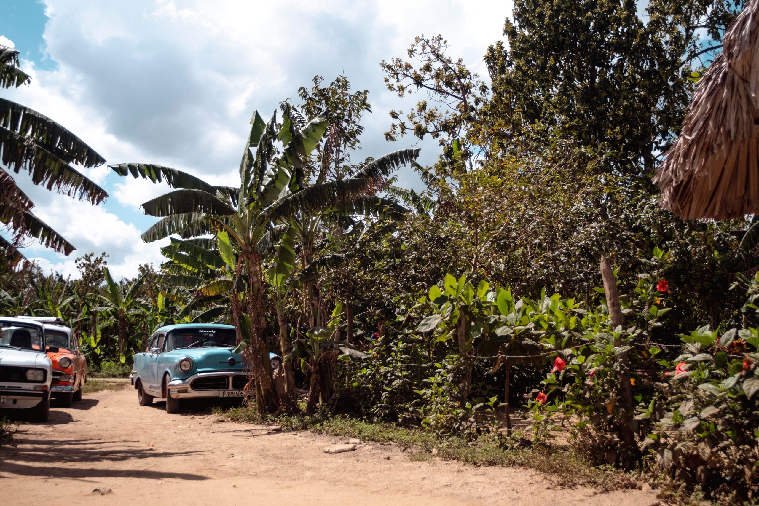 Imagen de la noticia Implementación de la suficiencia alimentaria y monitorización en tiempo real vía satélite de las actuaciones en zonas ecológicamente sensibles de Cuba, declaradas Patrimonio de la Humanidad – UNESCO