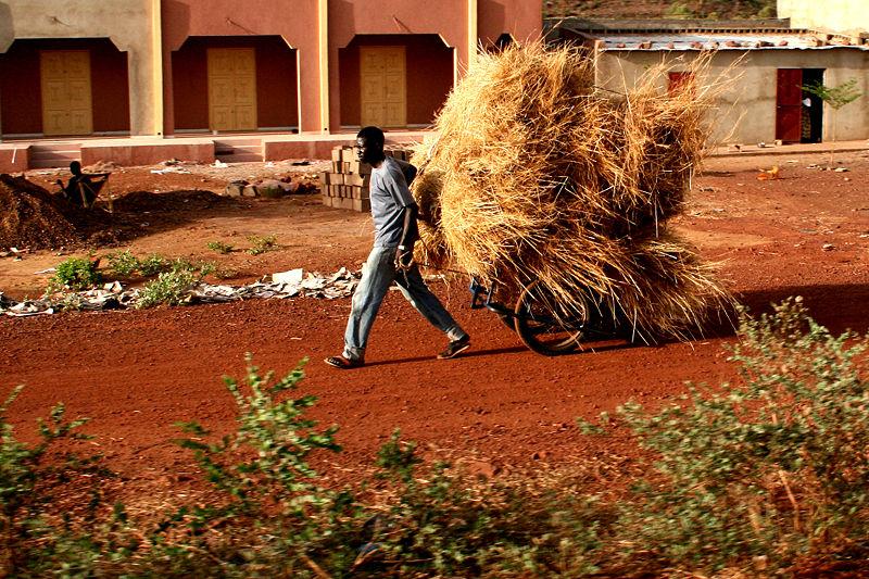Imagen de la noticia Mejora de los medios de vida y la resiliencia de las poblaciones vulnerables de los círculos de Tombuctú y Gourma Rharous (Malí)
