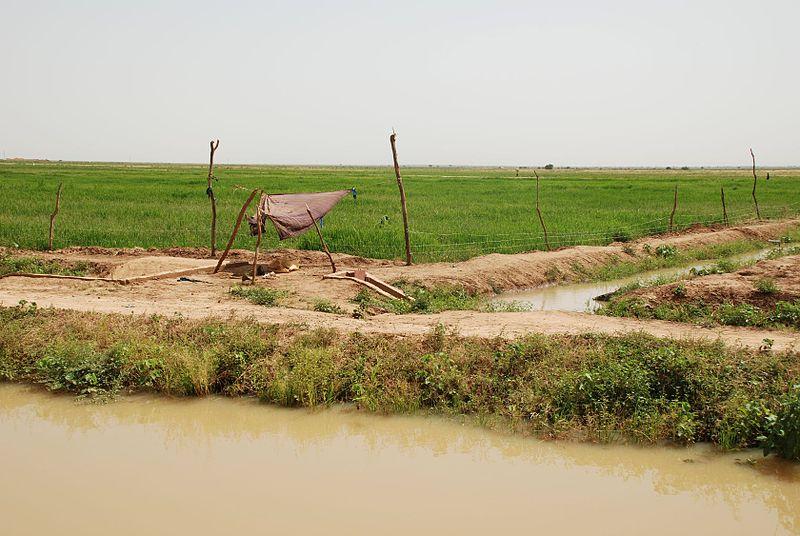 Imagen de la noticia Acceso al agua potable con tecnologías adaptadas y su gestión pública local con enfoque DEL, en 4 comunidades rurales de la región transfronteriza del Fouta Toro (entre Mauritania y Senegal). (AWA Fase II)