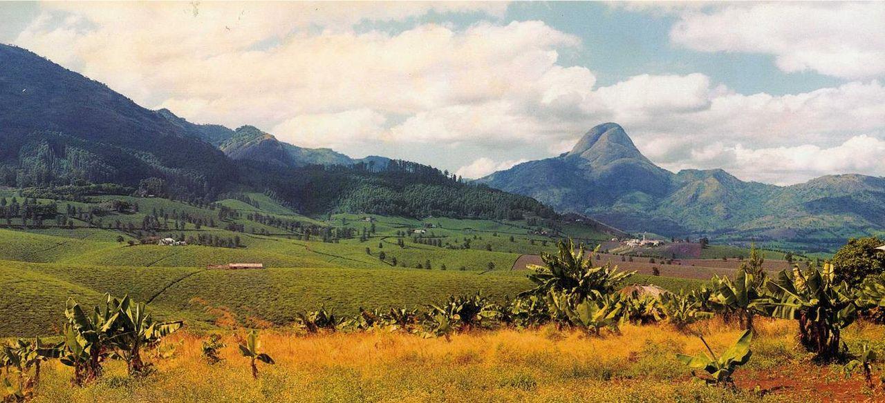 Imagen de la noticia Mejora del sector forestal de Mozambique a través del desarrollo de un sistema de identificación de las principales especies madereras