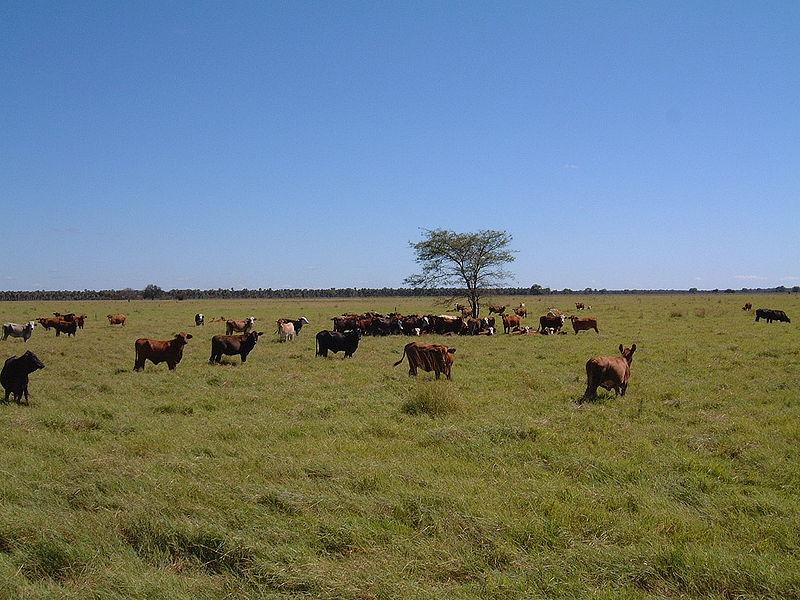 Imagen de la noticia Economía rural agroecológica en Paraguay: apoyo a la creación de una base productiva sostenible con inclusión de género basada en la yerba mate