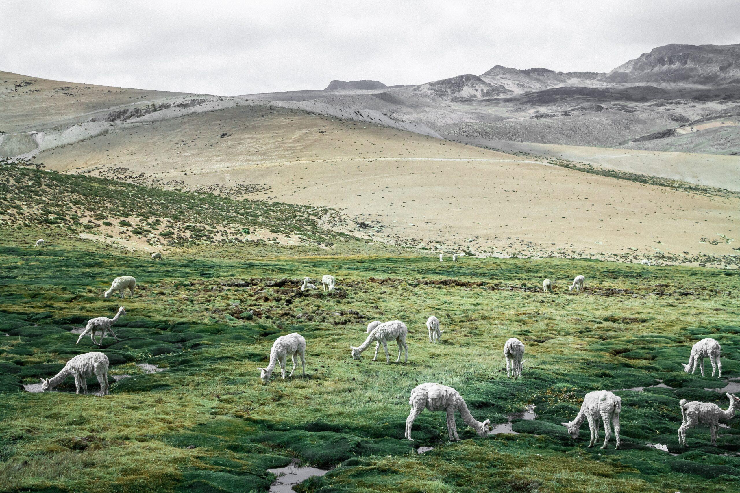 Imagen de fondo de Asociación de Servicio Integral de Cooperación Rural ANCCARA-SICRA