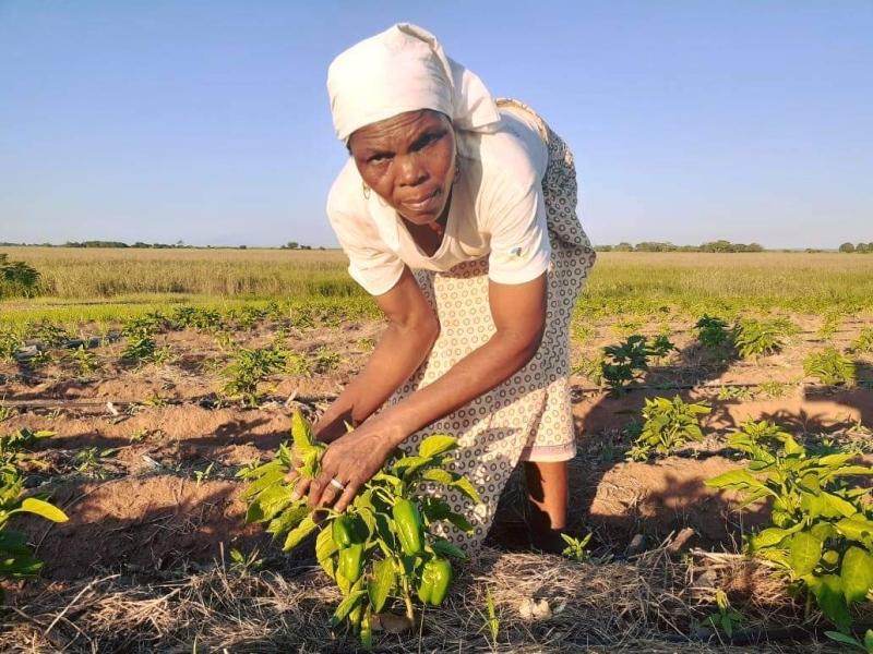 Imagen de la noticia Mejora de la gestión sostenible de los recursos naturales en la provincia de Maputo, Mozambique